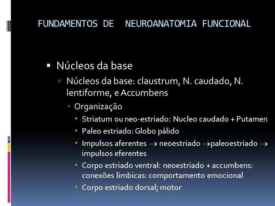 Núcleos da base Núcleos da base: claustrum, N. caudado, N. lentiforme, e Accumbens Organização Striatum ou neo-estriado: Nucleo caudado + Putamen Pale