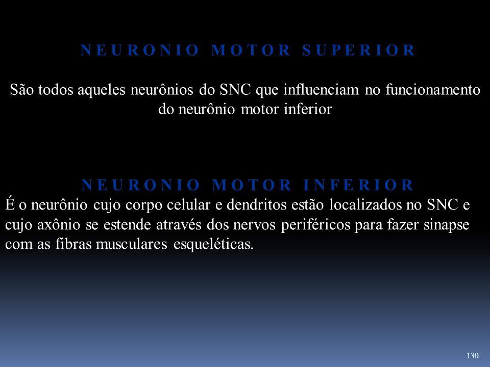 130 N E U R O N I O M O T O R S U P E R I O R São todos aqueles neurônios do SNC que influenciam no funcionamento do neurônio motor inferior N E U R O