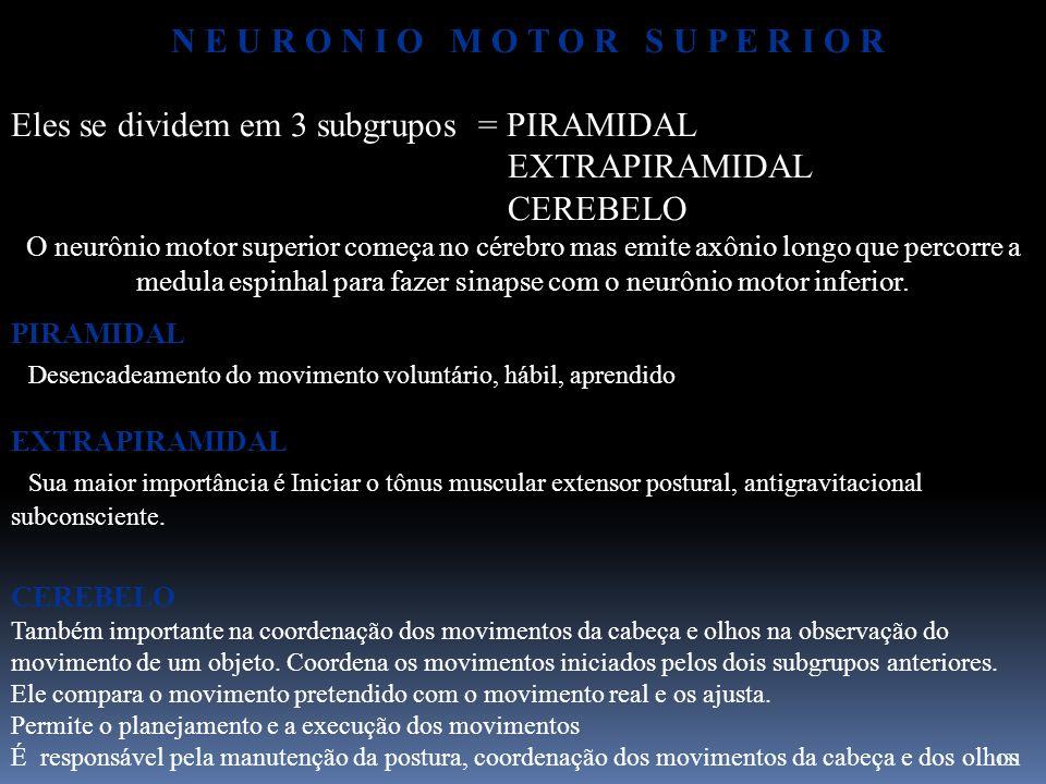 131 N E U R O N I O M O T O R S U P E R I O R Eles se dividem em 3 subgrupos = PIRAMIDAL EXTRAPIRAMIDAL CEREBELO O neurônio motor superior começa no c