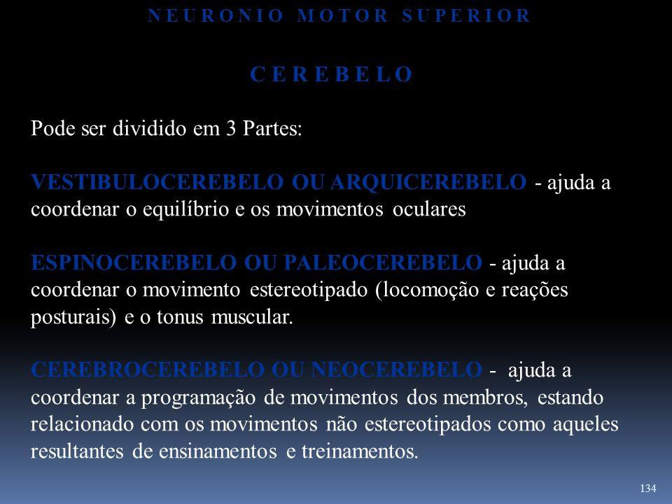 134 C E R E B E L O Pode ser dividido em 3 Partes: VESTIBULOCEREBELO OU ARQUICEREBELO - ajuda a coordenar o equilíbrio e os movimentos oculares ESPINO