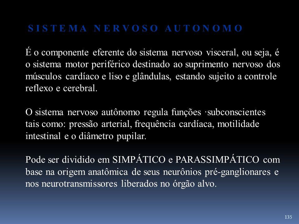 135 S I S T E M A N E R V O S O A U T O N O M O É o componente eferente do sistema nervoso visceral, ou seja, é o sistema motor periférico destinado a