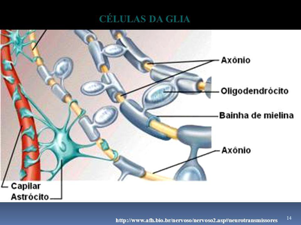 14 http://www.afh.bio.br/nervoso/nervoso2.asp#neurotransmissores CÉLULAS DA GLIA
