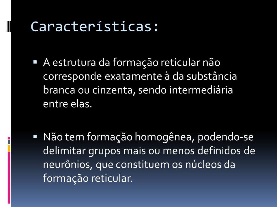 Características: A estrutura da formação reticular não corresponde exatamente à da substância branca ou cinzenta, sendo intermediária entre elas. Não