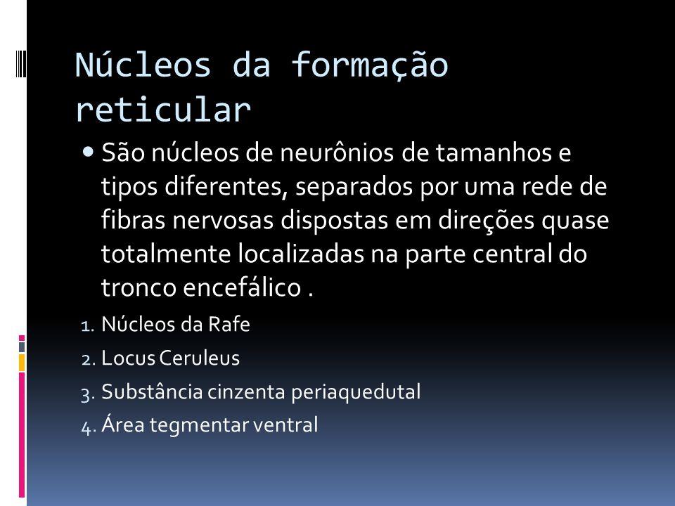 Núcleos da formação reticular São núcleos de neurônios de tamanhos e tipos diferentes, separados por uma rede de fibras nervosas dispostas em direções