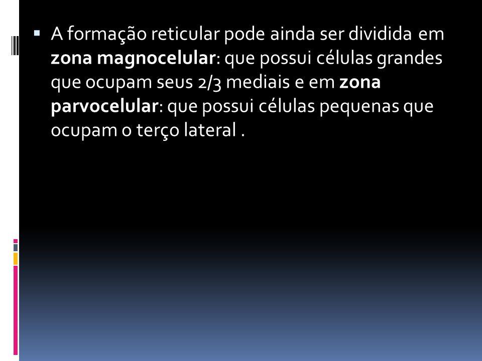 A formação reticular pode ainda ser dividida em zona magnocelular: que possui células grandes que ocupam seus 2/3 mediais e em zona parvocelular: que