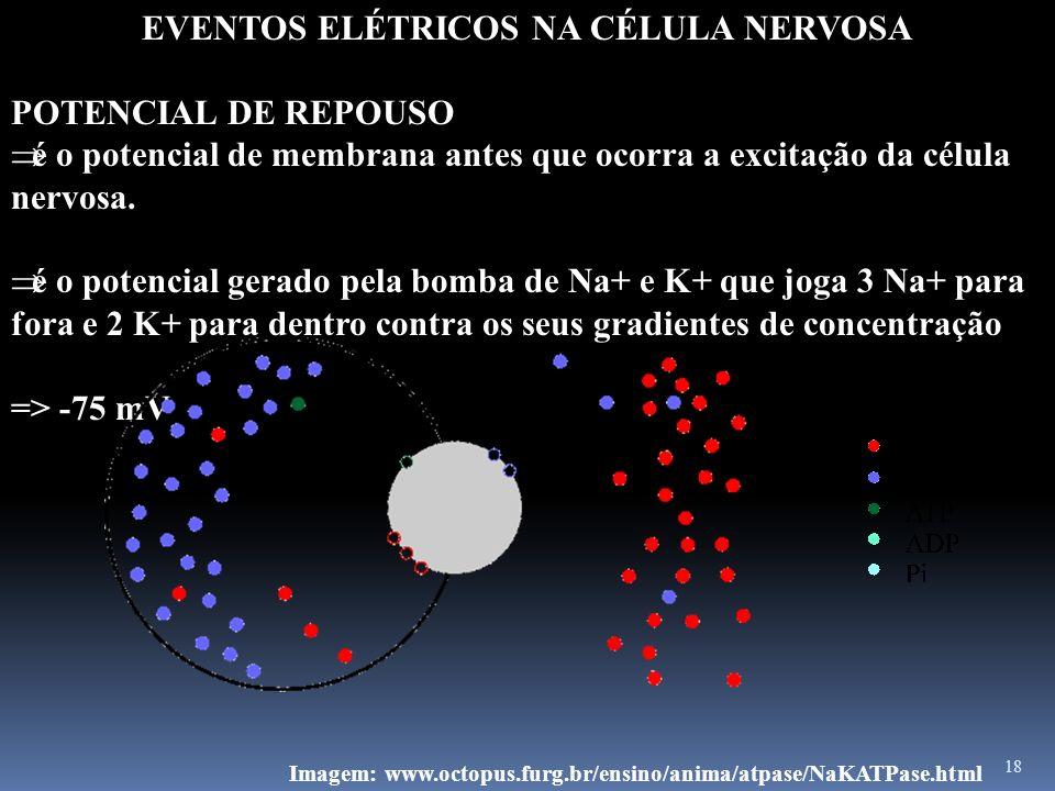 18 EVENTOS ELÉTRICOS NA CÉLULA NERVOSA POTENCIAL DE REPOUSO é o potencial de membrana antes que ocorra a excitação da célula nervosa. é o potencial ge