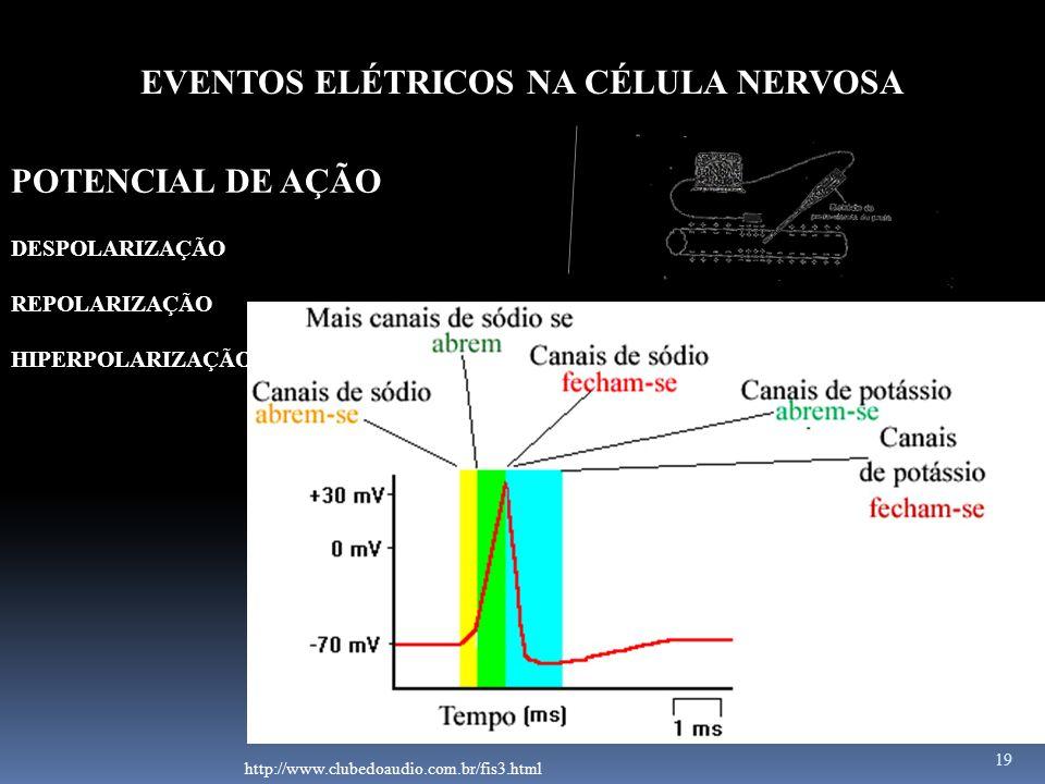 19 EVENTOS ELÉTRICOS NA CÉLULA NERVOSA POTENCIAL DE AÇÃO http://www.clubedoaudio.com.br/fis3.html DESPOLARIZAÇÃO REPOLARIZAÇÃO HIPERPOLARIZAÇÃO