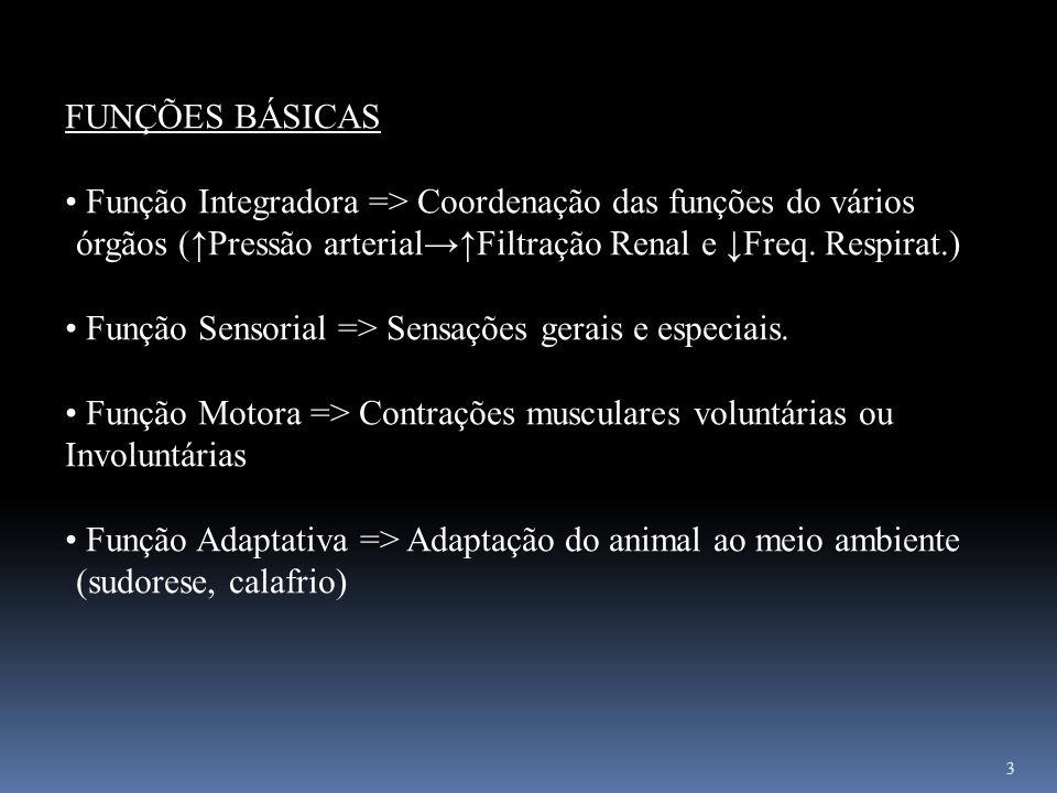 3 FUNÇÕES BÁSICAS Função Integradora => Coordenação das funções do vários órgãos (Pressão arterialFiltração Renal e Freq. Respirat.) Função Sensorial