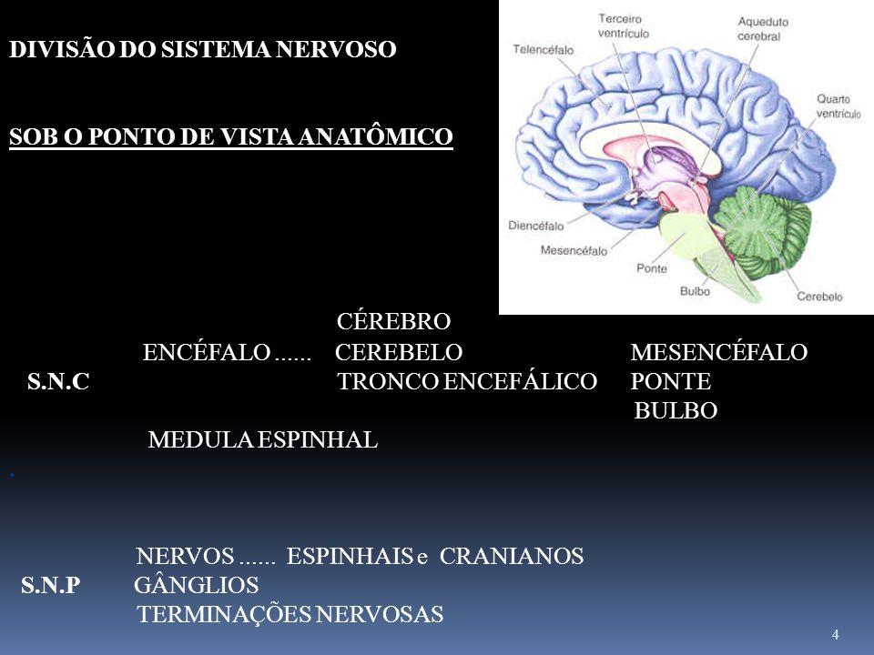4 DIVISÃO DO SISTEMA NERVOSO SOB O PONTO DE VISTA ANATÔMICO CÉREBRO ENCÉFALO...... CEREBELO MESENCÉFALO S.N.C TRONCO ENCEFÁLICO PONTE BULBO MEDULA ESP