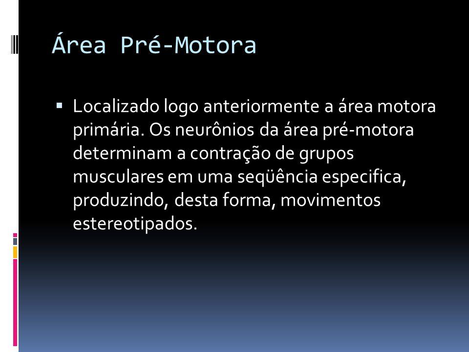Área Pré-Motora Localizado logo anteriormente a área motora primária. Os neurônios da área pré-motora determinam a contração de grupos musculares em u