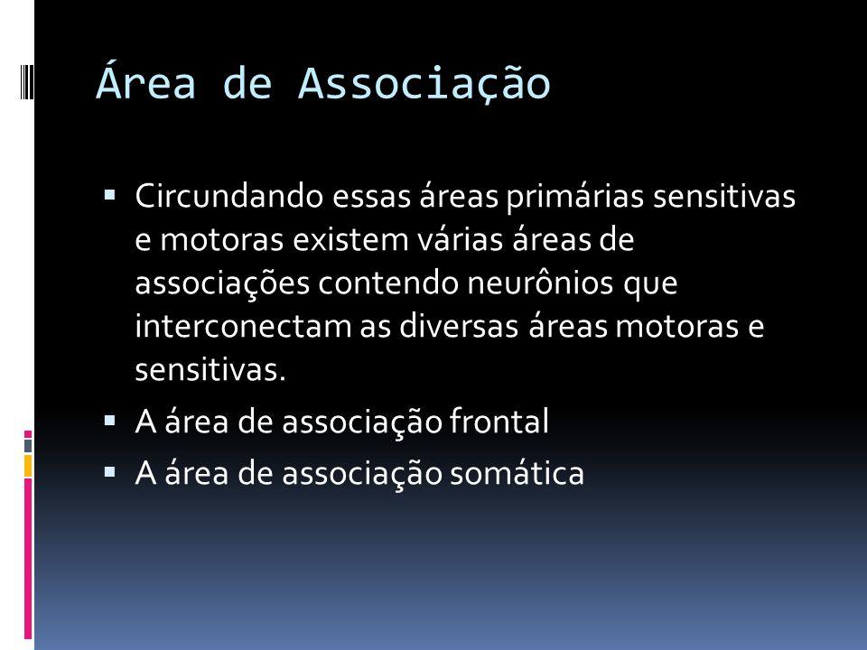 Área de Associação Circundando essas áreas primárias sensitivas e motoras existem várias áreas de associações contendo neurônios que interconectam as