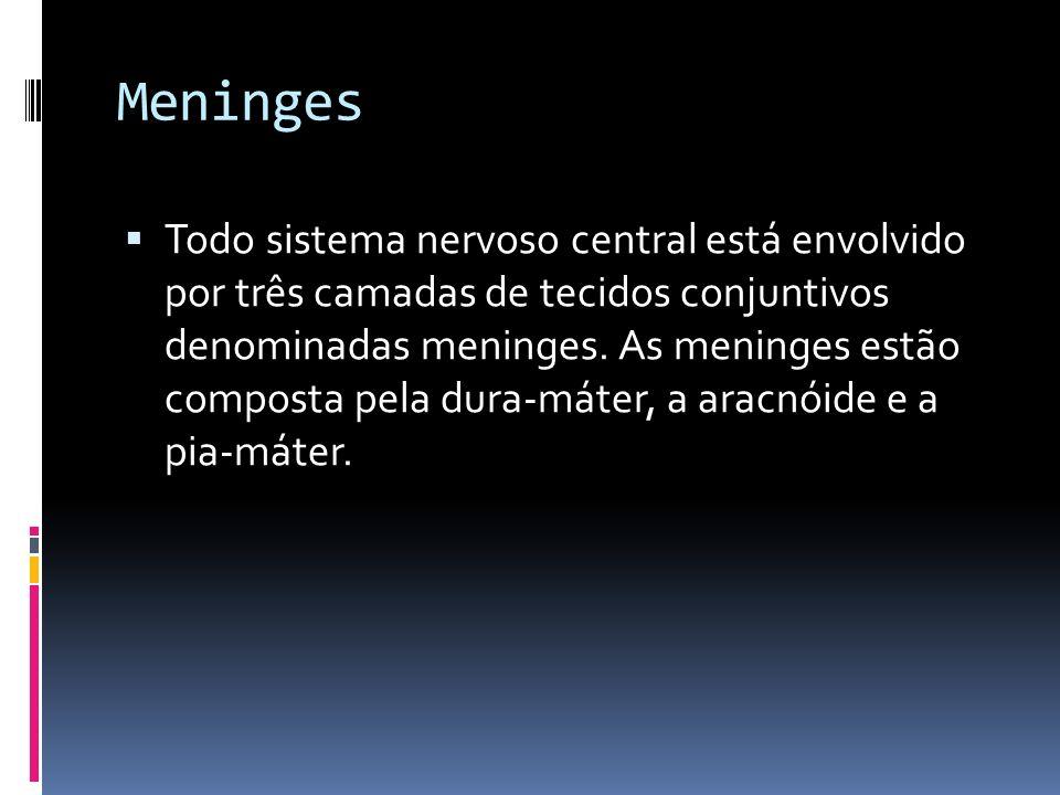 Meninges Todo sistema nervoso central está envolvido por três camadas de tecidos conjuntivos denominadas meninges. As meninges estão composta pela dur