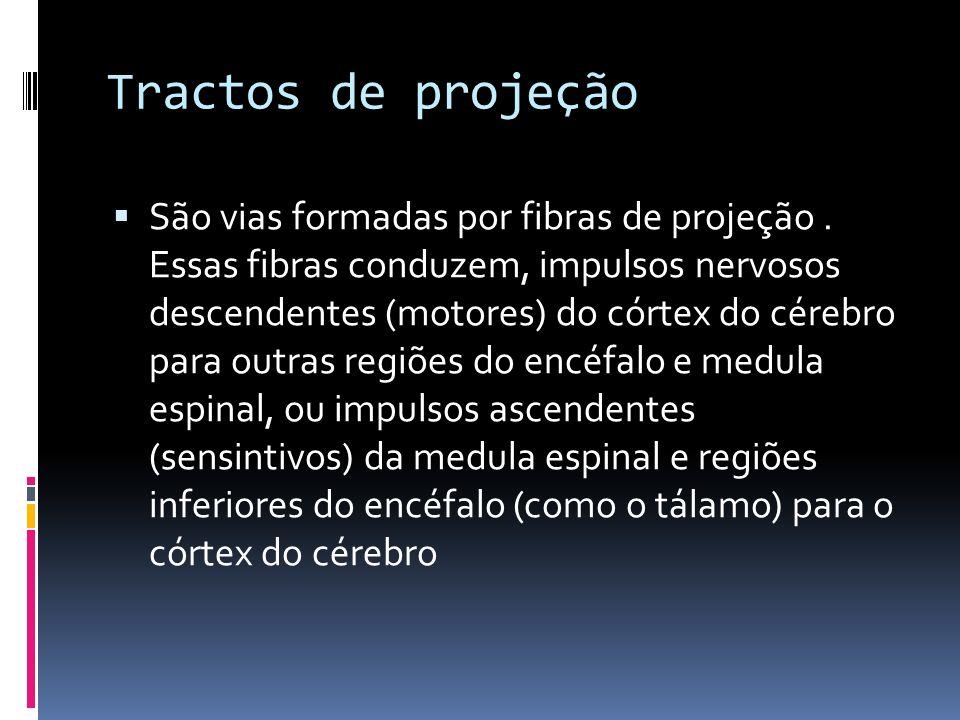 Tractos de projeção São vias formadas por fibras de projeção. Essas fibras conduzem, impulsos nervosos descendentes (motores) do córtex do cérebro par