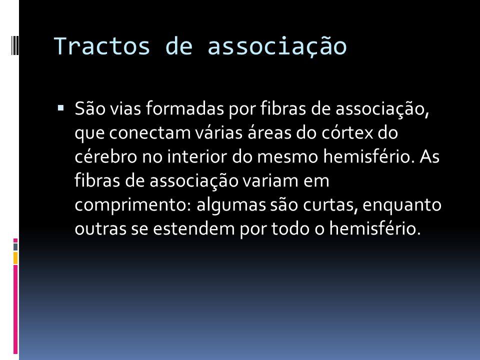 Tractos de associação São vias formadas por fibras de associação, que conectam várias áreas do córtex do cérebro no interior do mesmo hemisfério. As f