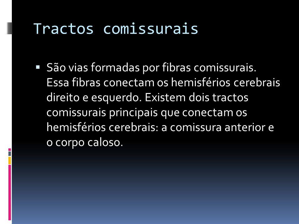 Tractos comissurais São vias formadas por fibras comissurais. Essa fibras conectam os hemisférios cerebrais direito e esquerdo. Existem dois tractos c