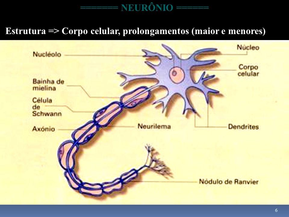 6 ======= NEURÔNIO ====== Estrutura => Corpo celular, prolongamentos (maior e menores)