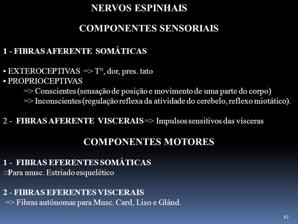 63 COMPONENTES SENSORIAIS 1 - FIBRAS AFERENTE SOMÁTICAS EXTEROCEPTIVAS => T°, dor, pres. tato PROPRIOCEPTIVAS => Conscientes (sensação de posição e mo