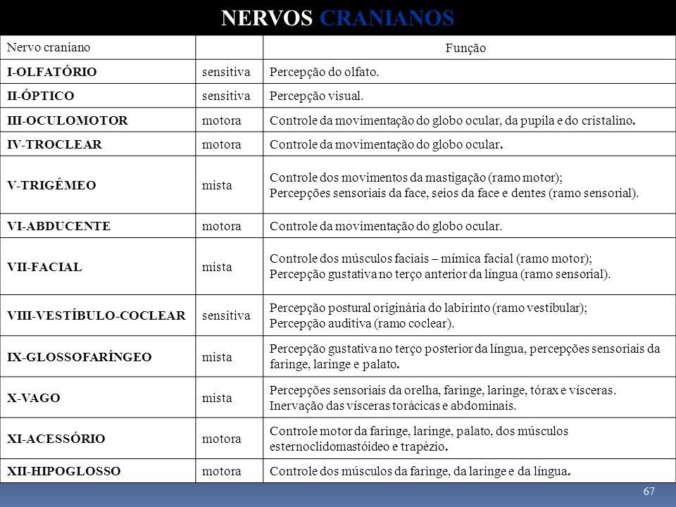67 Nervo craniano Função I-OLFATÓRIOsensitivaPercepção do olfato. II-ÓPTICOsensitivaPercepção visual. III-OCULOMOTORmotoraControle da movimentação do