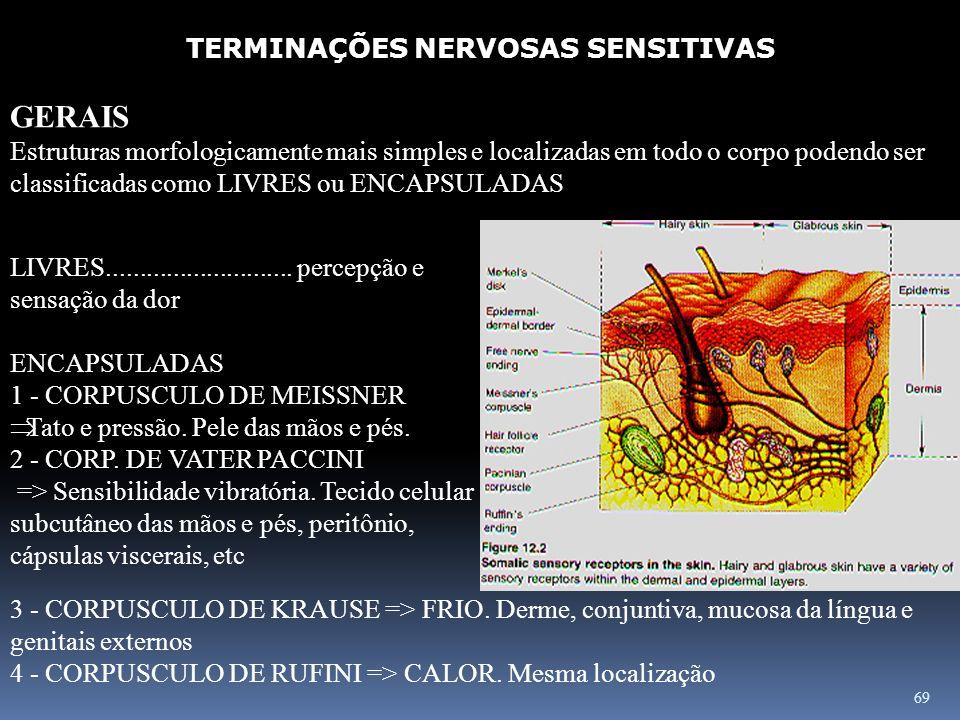 69 TERMINAÇÕES NERVOSAS SENSITIVAS GERAIS Estruturas morfologicamente mais simples e localizadas em todo o corpo podendo ser classificadas como LIVRES