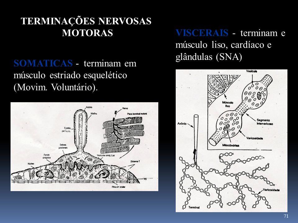 71 SOMATICAS - terminam em músculo estriado esquelético (Movim. Voluntário). TERMINAÇÕES NERVOSAS MOTORAS VISCERAIS - terminam e músculo liso, cardíac