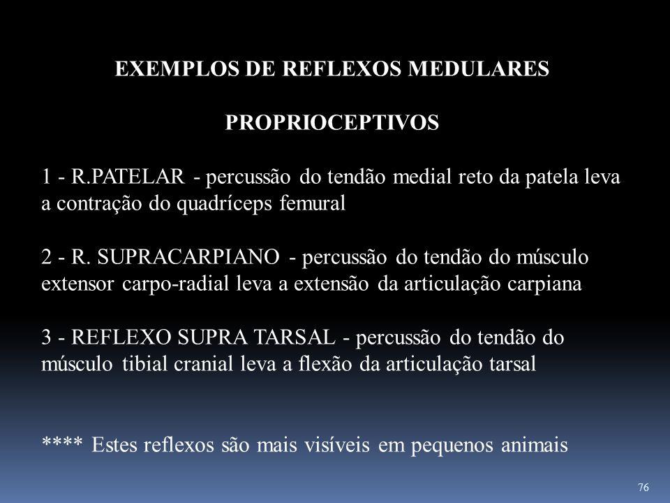 76 EXEMPLOS DE REFLEXOS MEDULARES PROPRIOCEPTIVOS 1 - R.PATELAR - percussão do tendão medial reto da patela leva a contração do quadríceps femural 2 -