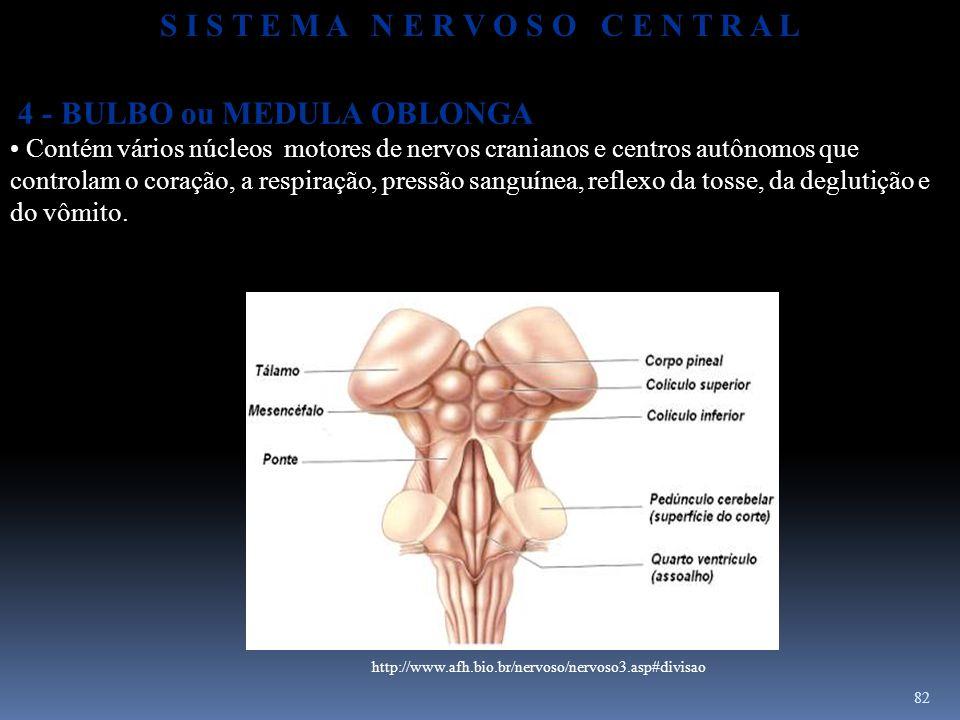 82 4 - BULBO ou MEDULA OBLONGA Contém vários núcleos motores de nervos cranianos e centros autônomos que controlam o coração, a respiração, pressão sa