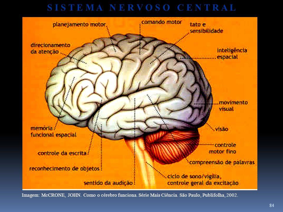 84 Imagem: McCRONE, JOHN. Como o cérebro funciona. Série Mais Ciência. São Paulo, Publifolha, 2002. S I S T E M A N E R V O S O C E N T R A L