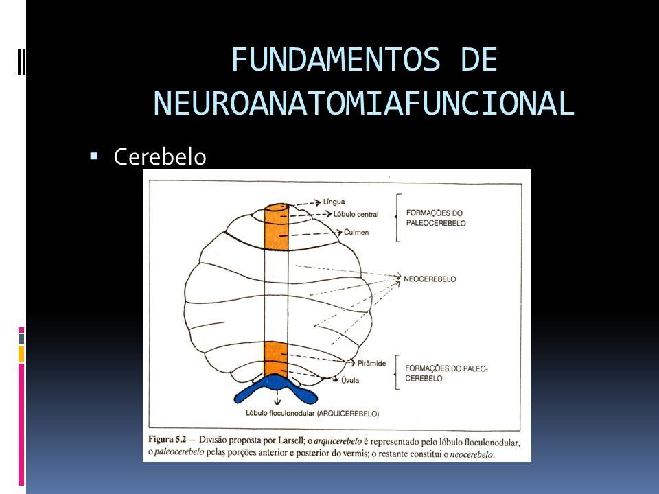 FUNDAMENTOS DE NEUROANATOMIAFUNCIONAL Cerebelo