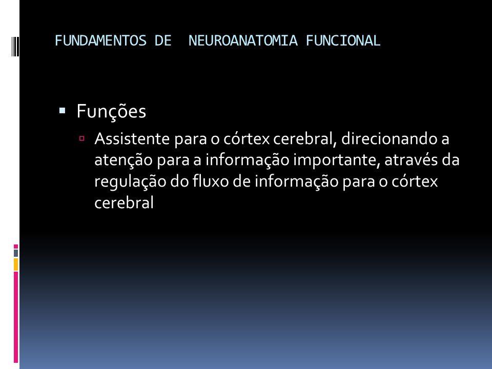 FUNDAMENTOS DE NEUROANATOMIA FUNCIONAL Funções Assistente para o córtex cerebral, direcionando a atenção para a informação importante, através da regu