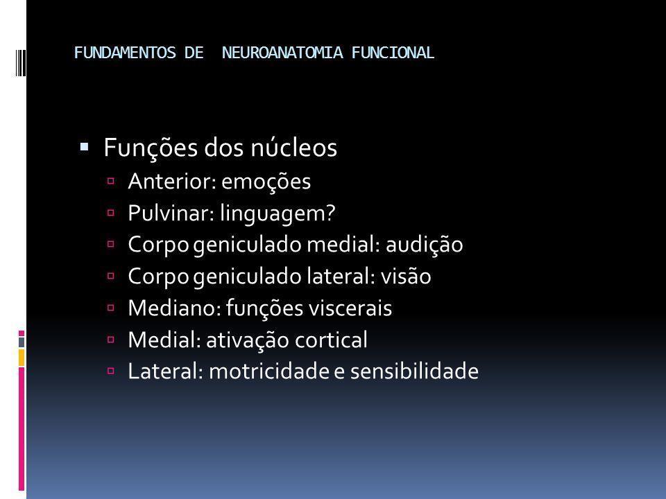 FUNDAMENTOS DE NEUROANATOMIA FUNCIONAL Funções dos núcleos Anterior: emoções Pulvinar: linguagem? Corpo geniculado medial: audição Corpo geniculado la