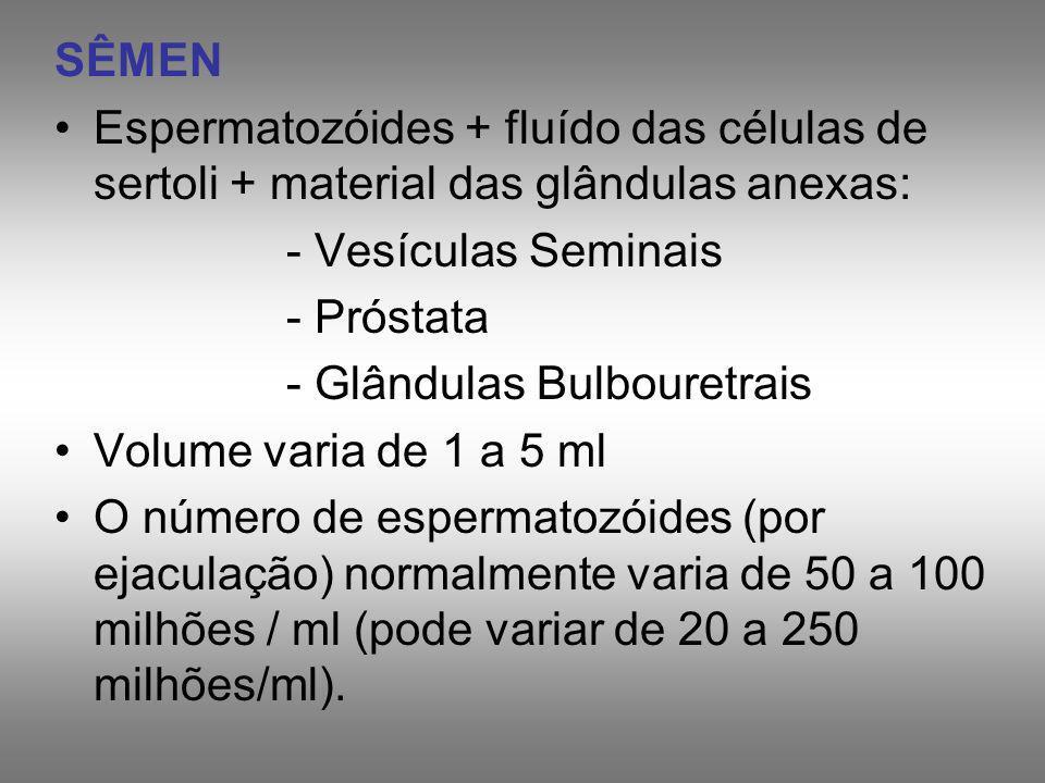 SÊMEN Espermatozóides + fluído das células de sertoli + material das glândulas anexas: - Vesículas Seminais - Próstata - Glândulas Bulbouretrais Volum