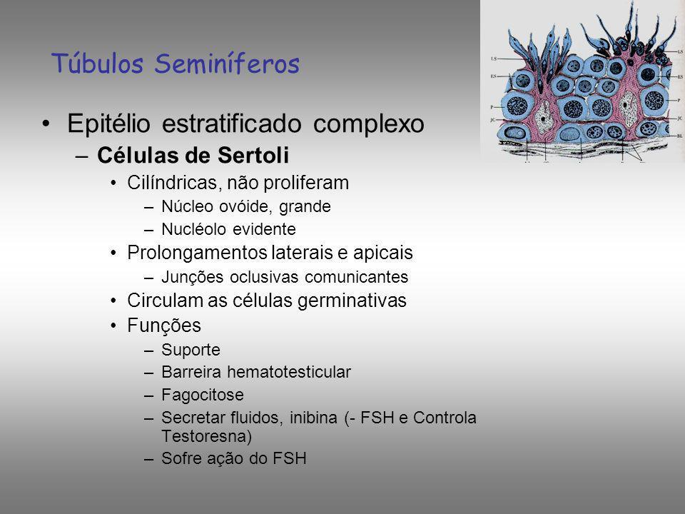 Células de Sertoli Compartimentos: 1.Compartimento Basal: Espermatogônias e Espermátides jovens 2.2.