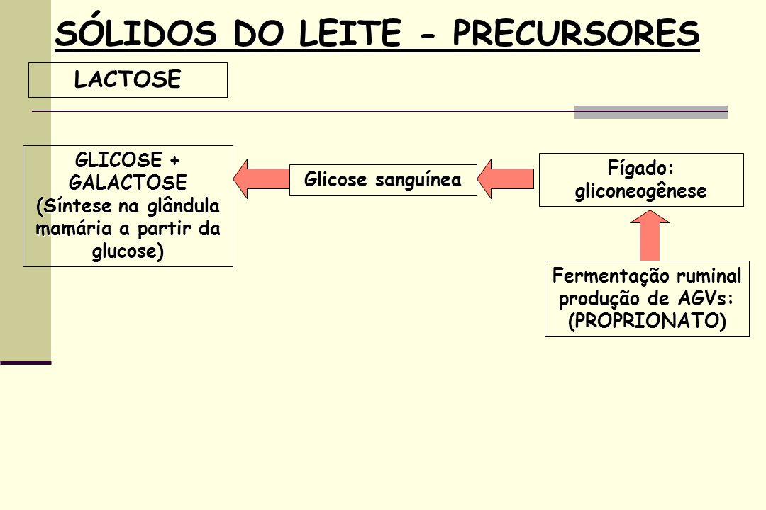 SÓLIDOS DO LEITE - PRECURSORES LACTOSE GLICOSE + GALACTOSE (Síntese na glândula mamária a partir da glucose) Glicose sanguínea Fermentação ruminal produção de AGVs: (PROPRIONATO) Fígado: gliconeogênese