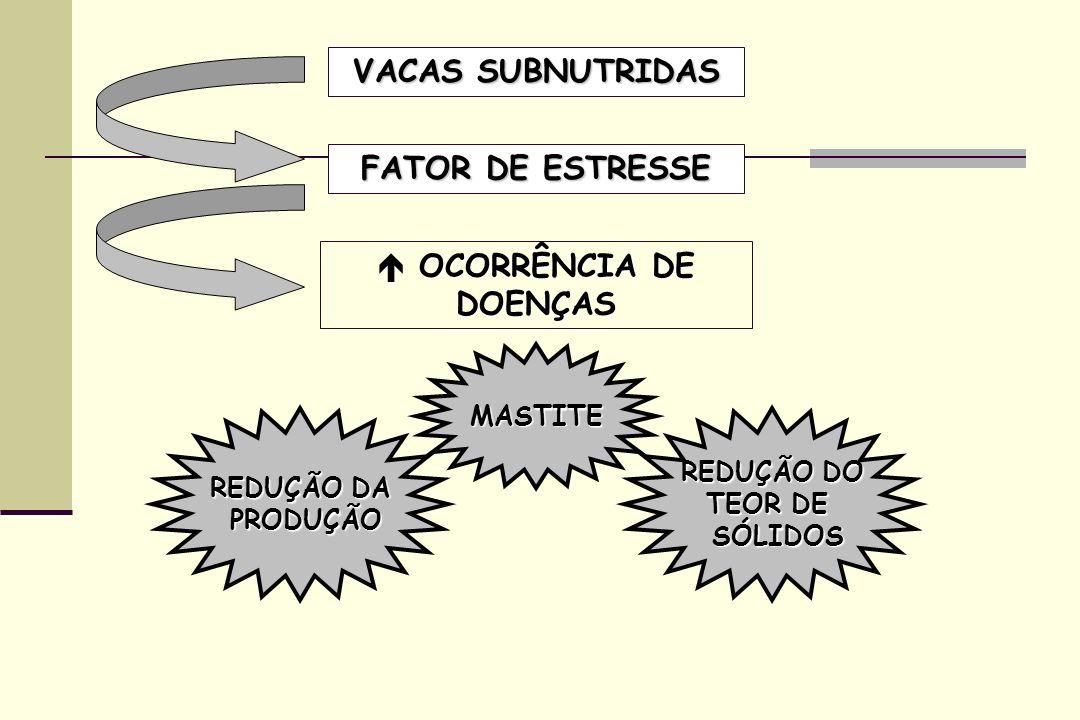 VACAS SUBNUTRIDAS FATOR DE ESTRESSE OCORRÊNCIA DE DOENÇAS OCORRÊNCIA DE DOENÇAS MASTITE REDUÇÃO DA PRODUÇÃO PRODUÇÃO REDUÇÃO DO TEOR DE SÓLIDOS SÓLIDO