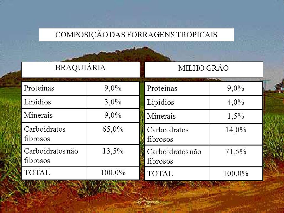 COMPOSIÇÃO DAS FORRAGENS TROPICAIS BRAQUIÁRIA MILHO GRÃO Proteínas9,0% Lipídios3,0% Minerais9,0% Carboidratos fibrosos 65,0% Carboidratos não fibrosos