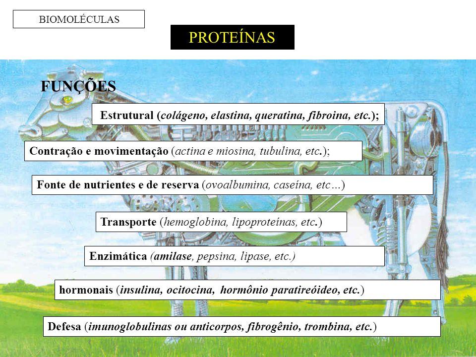 BIOMOLÉCULAS PROTEÍNAS Estrutural (colágeno, elastina, queratina, fibroina, etc.); Contração e movimentação (actina e miosina, tubulina, etc.); FUNÇÕES Fonte de nutrientes e de reserva (ovoalbumina, caseína, etc…) Transporte (hemoglobina, lipoproteínas, etc.) Enzimática (amilase, pepsina, lipase, etc.) hormonais (insulina, ocitocina, hormônio paratireóideo, etc.) Defesa (imunoglobulinas ou anticorpos, fibrogênio, trombina, etc.)
