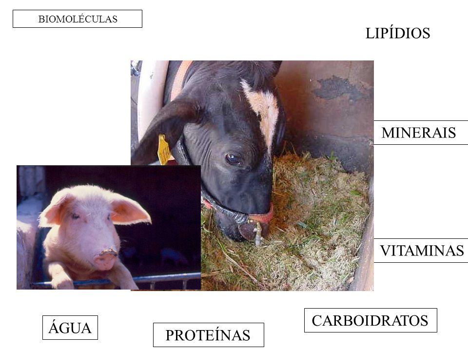BIOMOLÉCULAS ÁGUA PROTEÍNAS CARBOIDRATOS LIPÍDIOS MINERAIS VITAMINAS