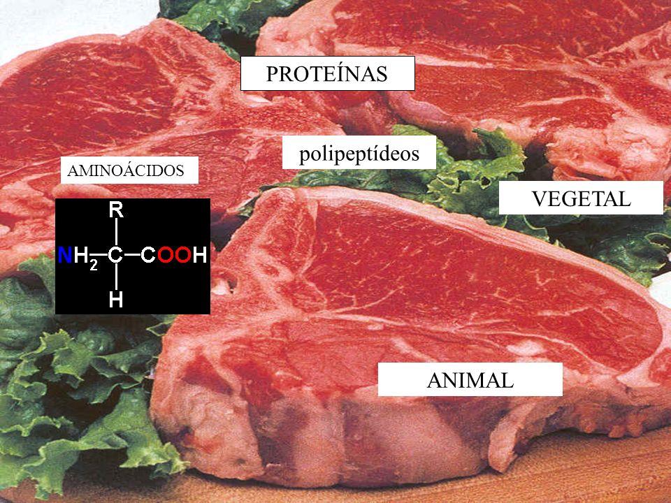 PROTEÍNAS AMINOÁCIDOS ANIMAL VEGETAL polipeptídeos