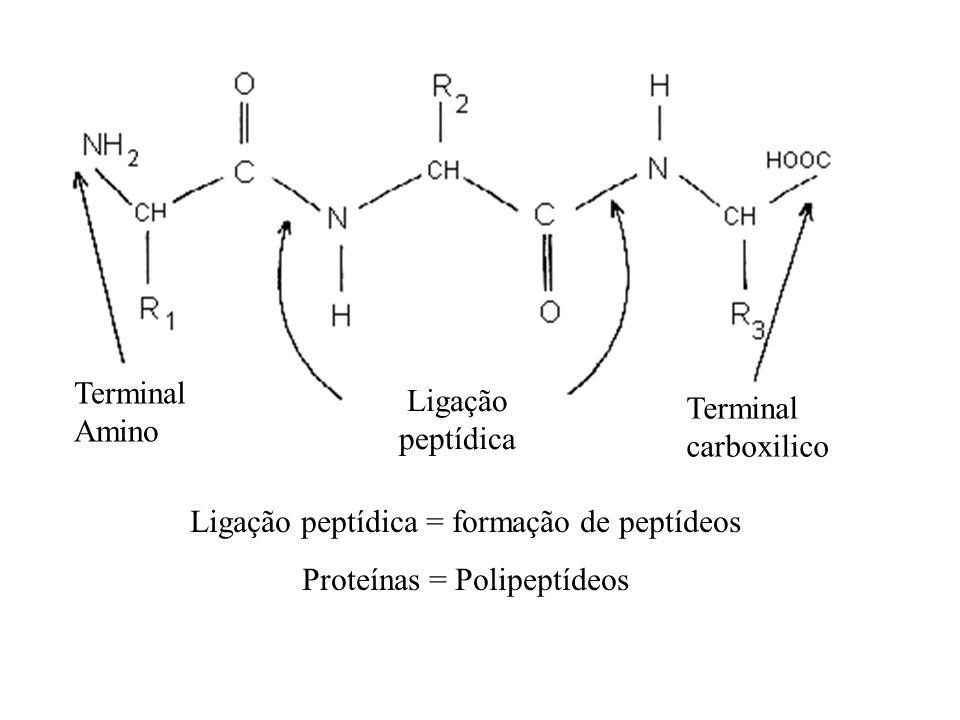 Ligação peptídica = formação de peptídeos Proteínas = Polipeptídeos Terminal Amino Terminal carboxilico Ligação peptídica