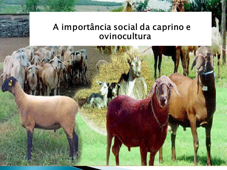 possui 1 abatedouro Distrito Federal consome 24 toneladas de carne ovina/mês carne ovina/mês oferta aproximada de 700kg/mês importando 95% da carne que consome Importância social Por que criar caprinos e ovinos em Goiás.