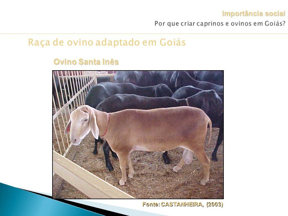 Raça de ovino adaptado em Goiás Fonte: CASTANHEIRA, (2003) Fonte: CASTANHEIRA, (2003) Ovino Santa Inês Importância social