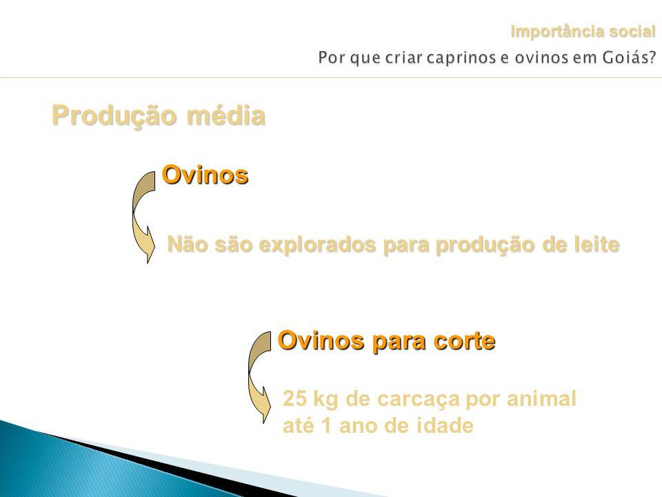 Produção média Ovinos Não são explorados para produção de leite Ovinos para corte 25 kg de carcaça por animal até 1 ano de idade Importância social