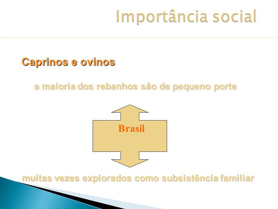 No Brasil 9.470.000 cabeças 90% do efetivo está no nordeste 9º maior rebanho do mundo Centro Oeste 94.361 cabeças Goiás 27.169 cabeças Fonte: ANUALPEC, 2002 Rebanho Caprino Rebanho Caprino Importância social