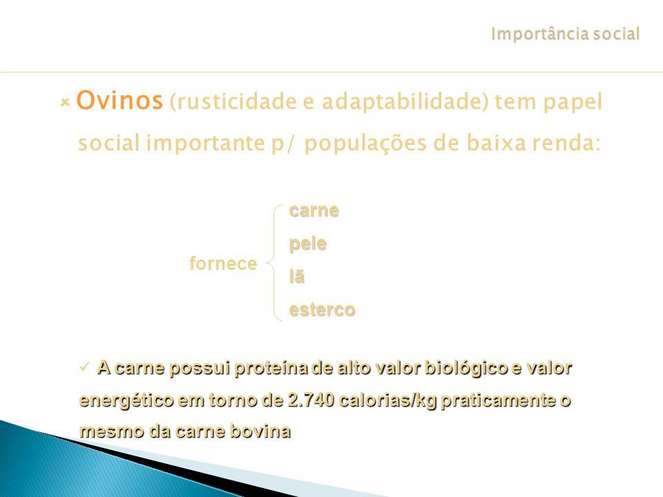 Ovinos (rusticidade e adaptabilidade) tem papel social importante p/ populações de baixa renda: carnepelelãesterco fornece A carne possui proteína de