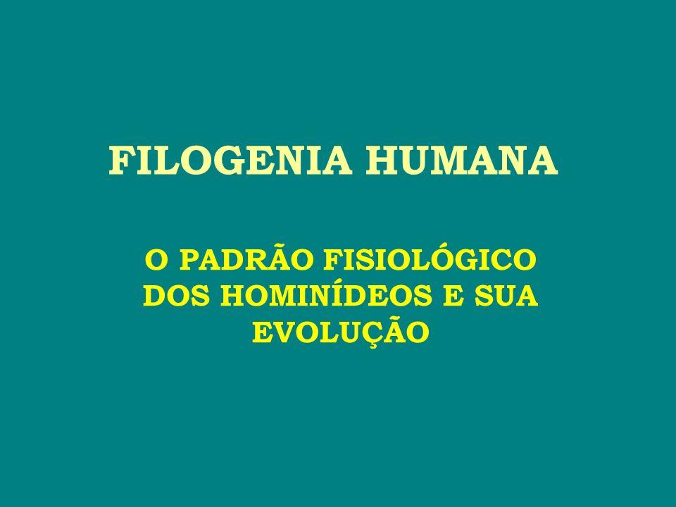 FILOGENIA HUMANA O PADRÃO FISIOLÓGICO DOS HOMINÍDEOS E SUA EVOLUÇÃO