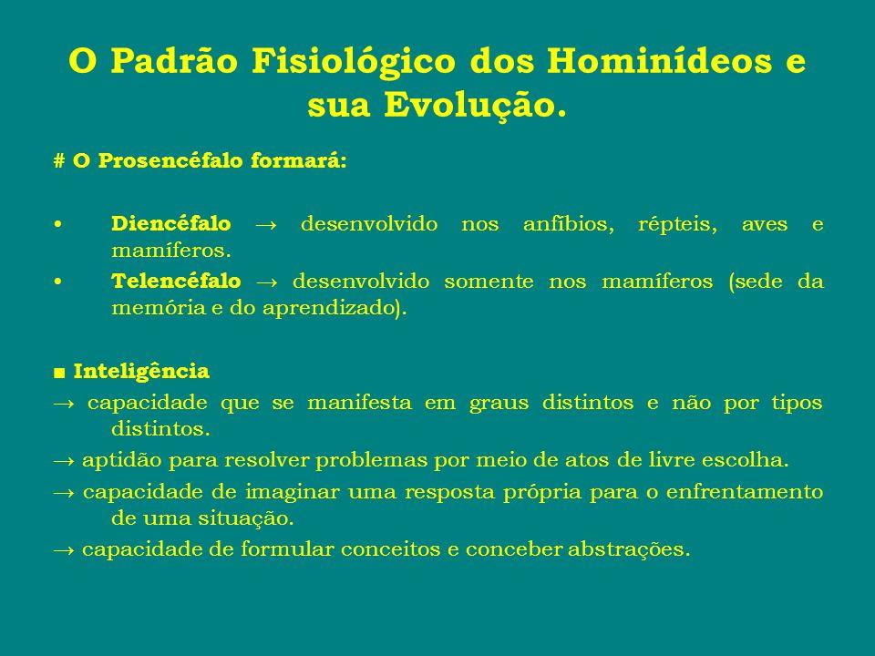 O Padrão Fisiológico dos Hominídeos e sua Evolução. # O Prosencéfalo formará: Diencéfalo desenvolvido nos anfíbios, répteis, aves e mamíferos. Telencé