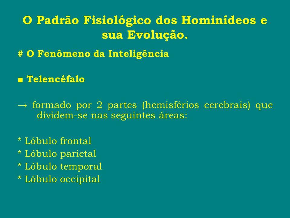 O Padrão Fisiológico dos Hominídeos e sua Evolução. # O Fenômeno da Inteligência Telencéfalo formado por 2 partes (hemisférios cerebrais) que dividem-