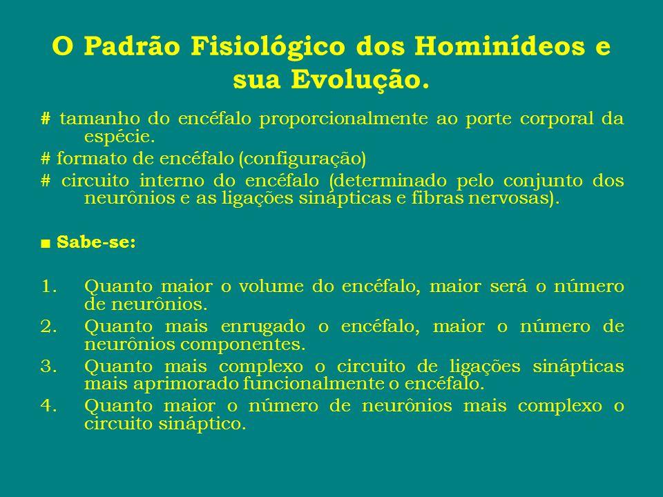 O Padrão Fisiológico dos Hominídeos e sua Evolução. # tamanho do encéfalo proporcionalmente ao porte corporal da espécie. # formato de encéfalo (confi