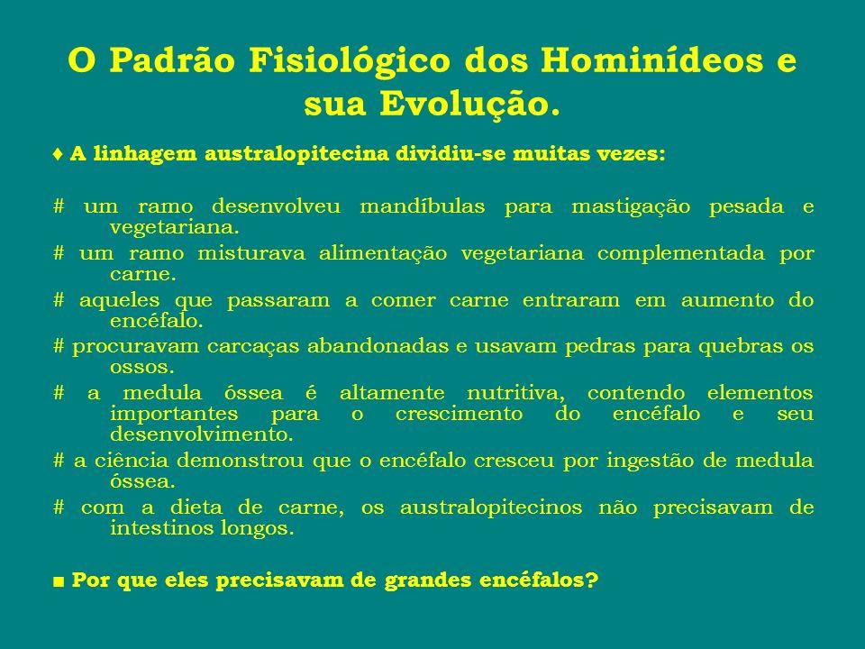 O Padrão Fisiológico dos Hominídeos e sua Evolução. A linhagem australopitecina dividiu-se muitas vezes: # um ramo desenvolveu mandíbulas para mastiga