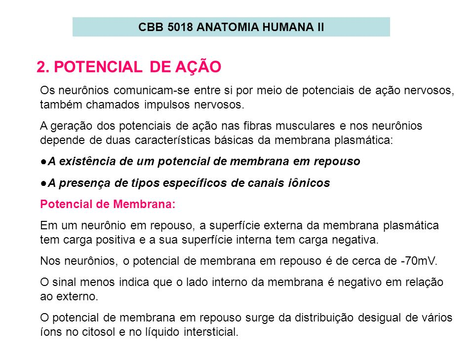 CBB 5018 ANATOMIA HUMANA II 2. POTENCIAL DE AÇÃO Os neurônios comunicam-se entre si por meio de potenciais de ação nervosos, também chamados impulsos
